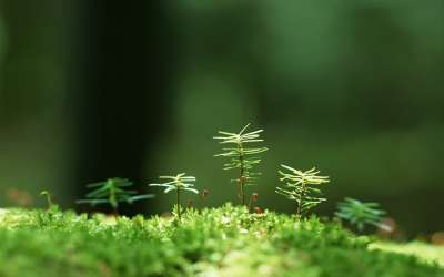 Grass With Tiny Trees