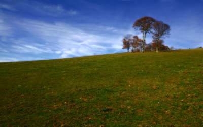 Indian Tree Hill Meadow