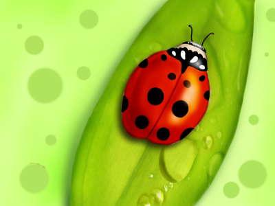 Ladybug On Leaf Top