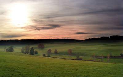 Meadow In Germany