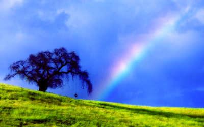 Rainbow Field Tree