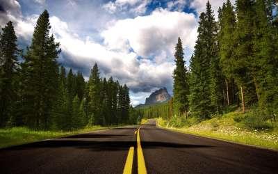 Road Through Forrest
