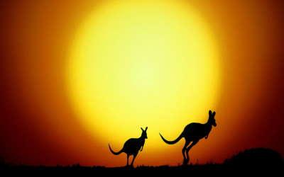 Sunset Kangaroo