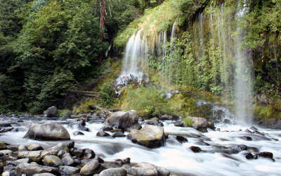 Waterfall Forrest