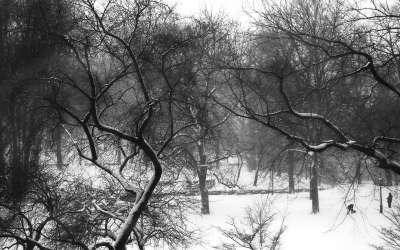 Park on winter