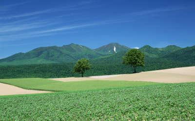 Hokkaido Field