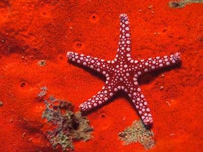 Underwater Star