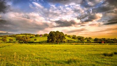Serenity Meadow