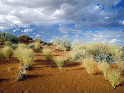 Kgalagadi Transfrontier Park South Africa