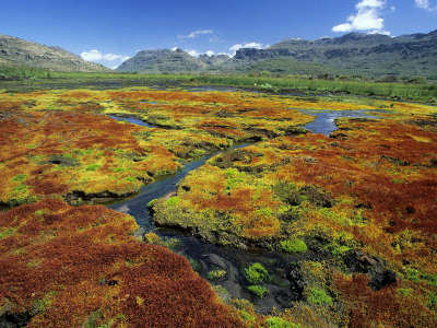 Colorful Mosses Cedarberg Wilderness Area Northern Cape South Africa