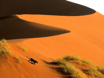 Crossing The Sand Dunes Of Sossusvlei Park Namibia Africa