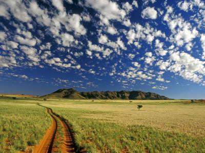 Tok Tokkie NamibRand Reserve Namib Desert Namibia