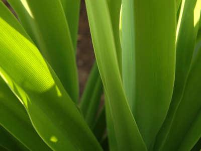 Closeup Grass Scene