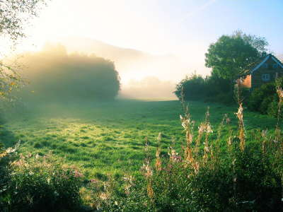Fogy Meadow with Forrest