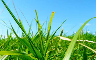 Grass from close up