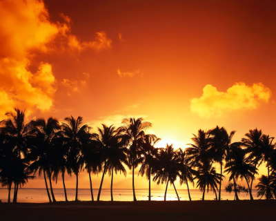 Palms on sunset beach