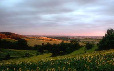 Beuty Hills
