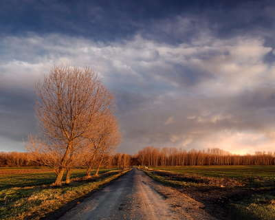 Meadow and road
