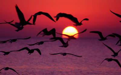 Sunrise with flying Birds