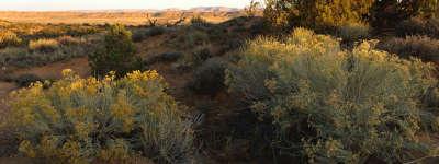 Nature Field