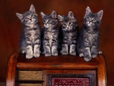 Animal Cats