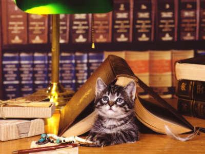 Cat  under the Books