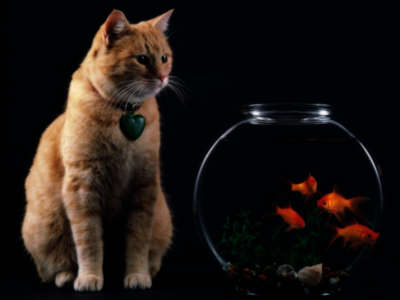 Cat  and The Fish