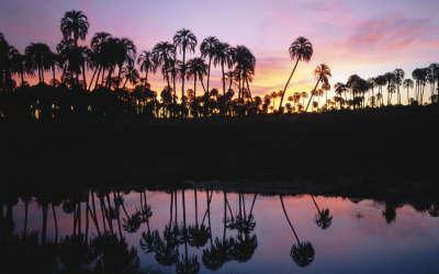 Beauty Palms