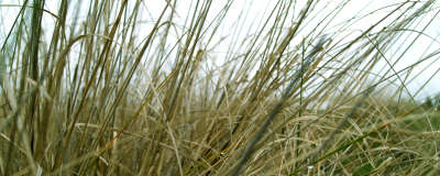 Grass on Meadow