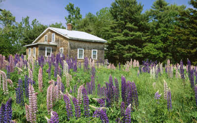 Meadow with Flowers and House
