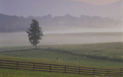 Meadow with Fog