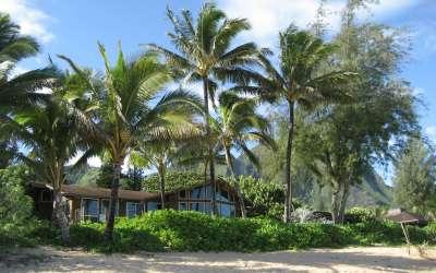 Palms on Sand Beach