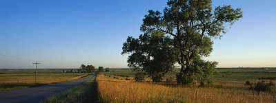Tree and Meadow with Road