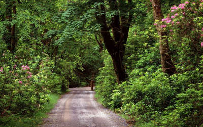 Kylemore Wood Road County Galway Ireland