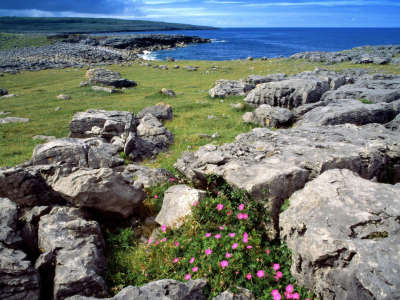 Wildflowers Of The Burren Ireland