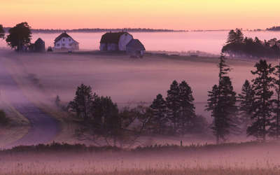 Field and Fog