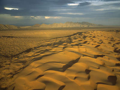 Mexico Desert
