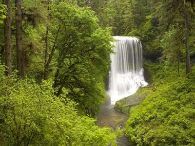 Middle North Falls Silver Falls State Park In Spring Oregon