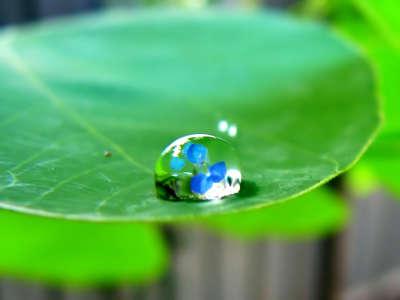 Spring Waterdrop