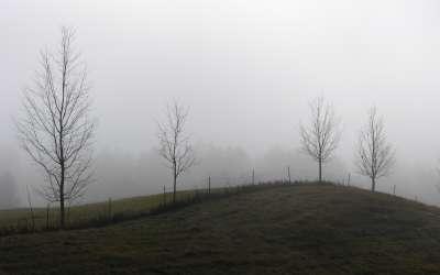 Dewy Meadow Hill