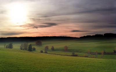 Spring Evening Meadow
