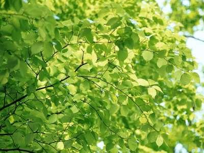 Spring Season Blooming Of Green Leaves