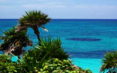 Sea Beach with Palms