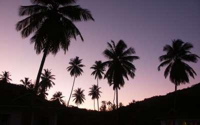 Twilight with Palms