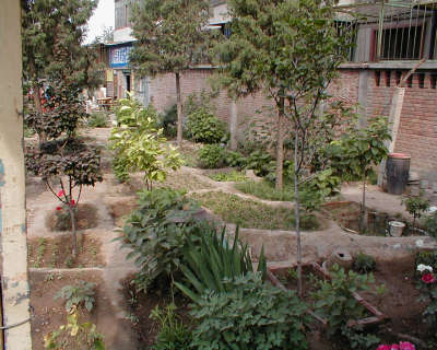 Beijing Garden IV