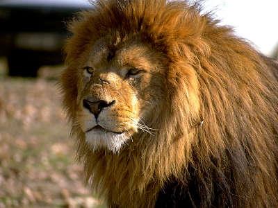 Earth Lion 1