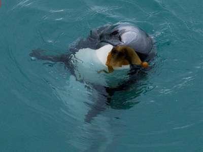 Dolphin Weeding