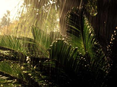 Falling Rain on Palms