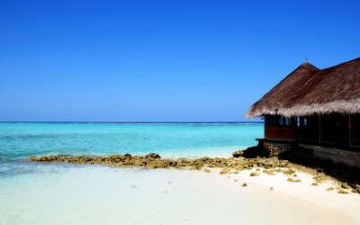 Paradise Hut