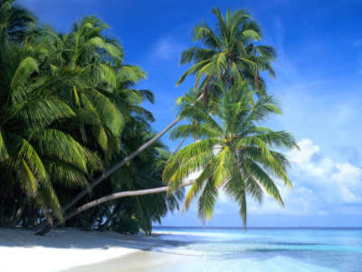 Palm Paradise in Maldive Islands